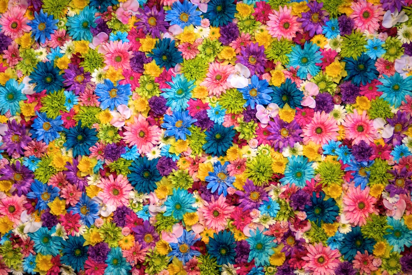 Colorful Flower Wall Ogq Backgrounds Hd